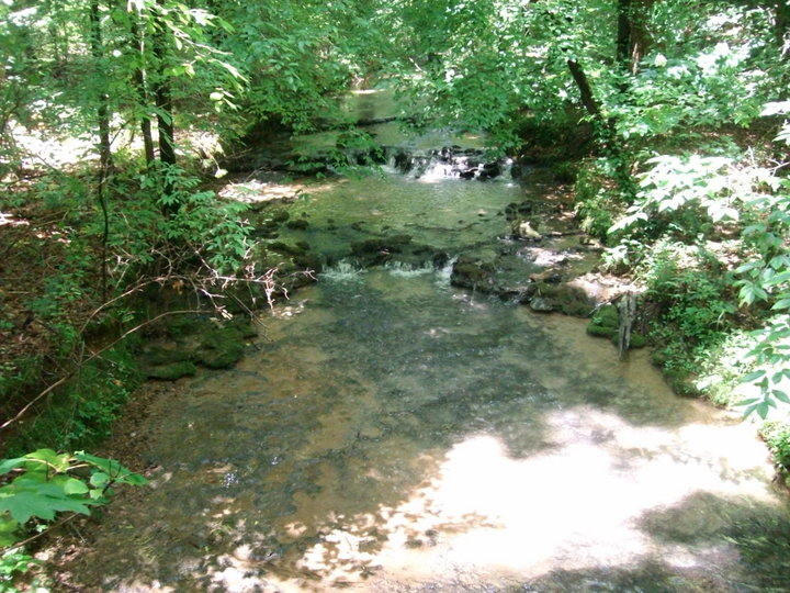 Shoal Creek Preserve Photos